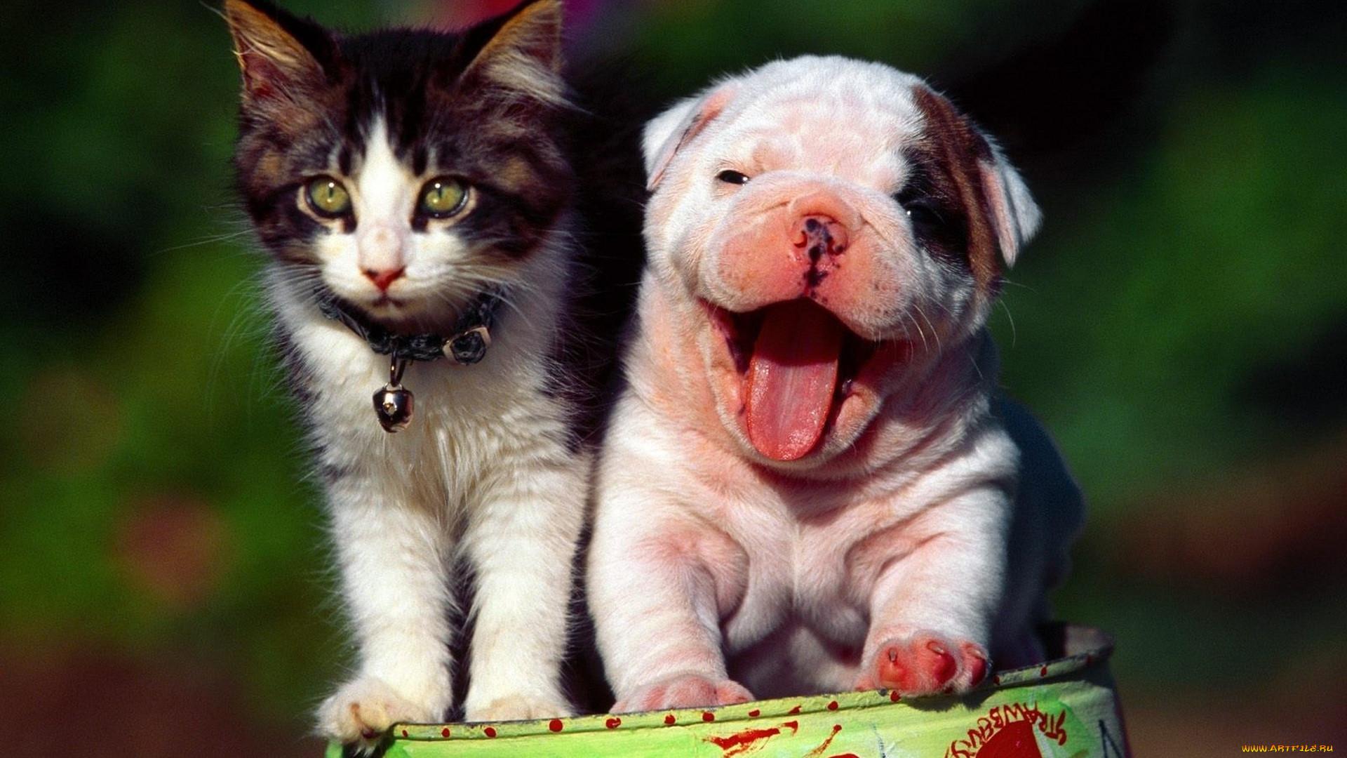 работе над картинки приколы про домашних животных современная селекция предлагает